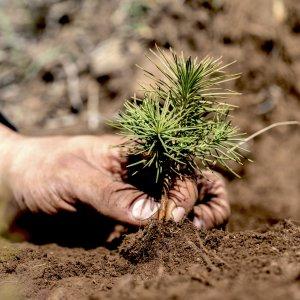 Convierte el CO2 en bosques
