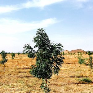 Planta árboles, revitaliza la naturaleza
